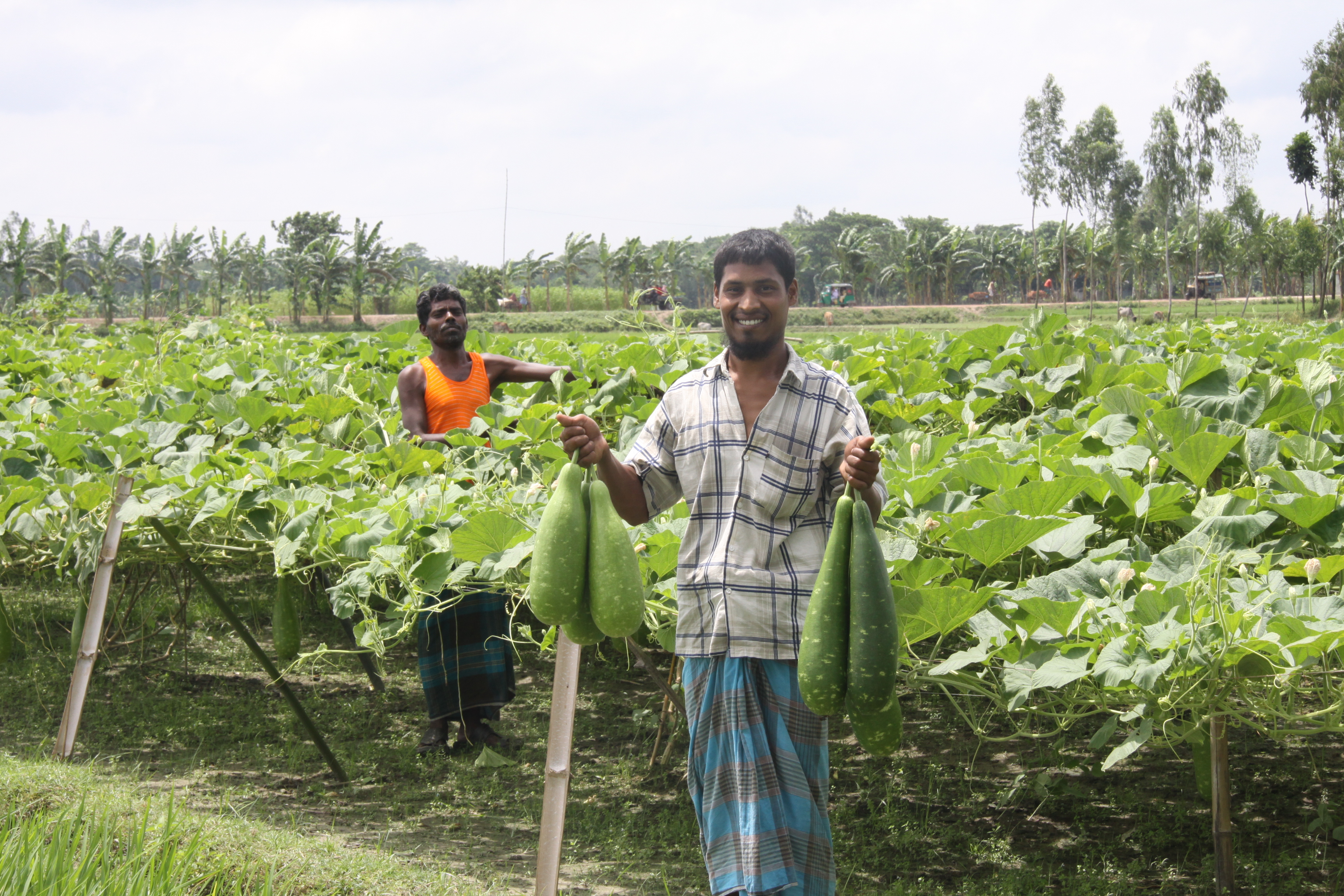 Saline Vegetables - Lal Teer Seed Ltd