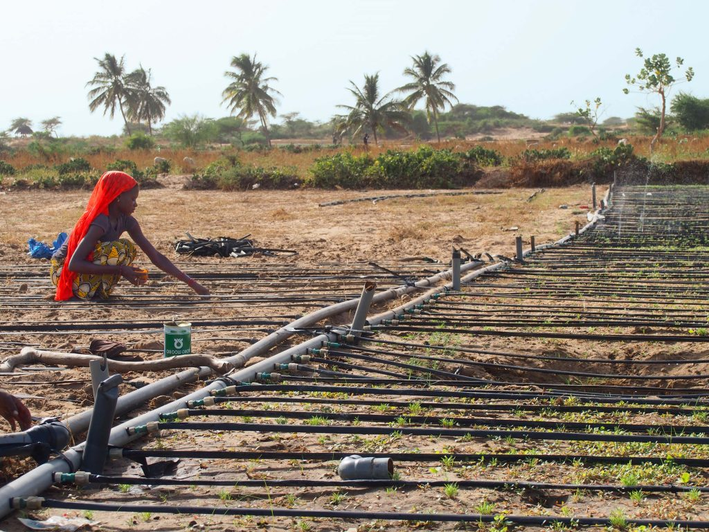 woman looking at irrigation system and drip tape in Senegal