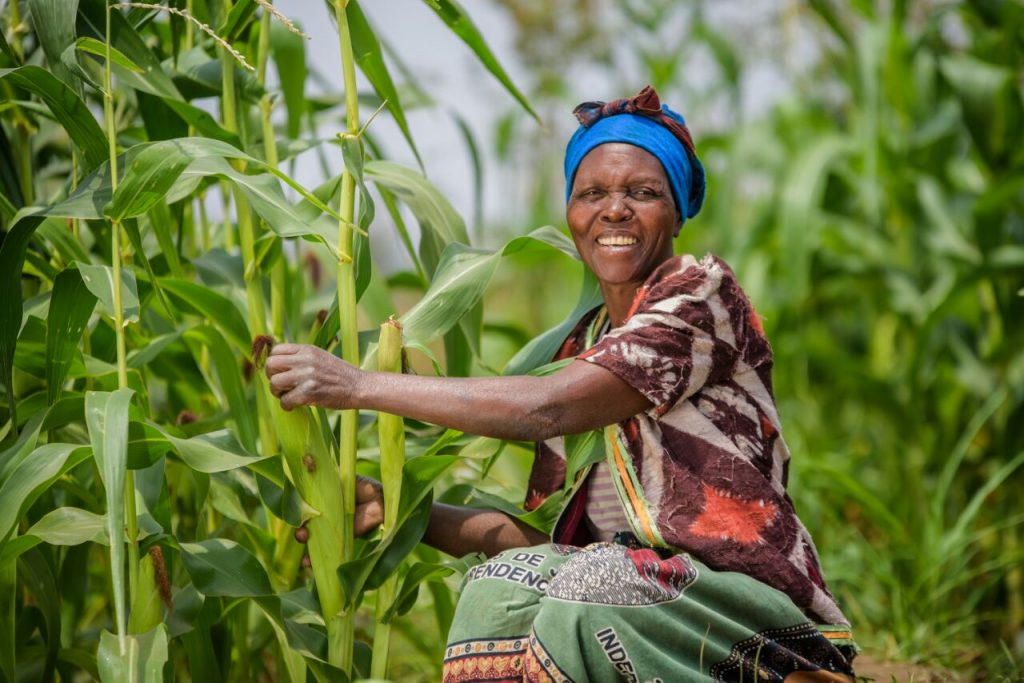 photo of woman smiling at the camera as she tends to her corn stalks